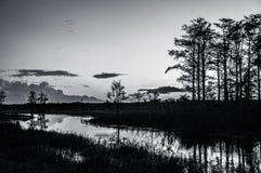 Coucher du soleil noir et blanc par les arbres des marais photos stock