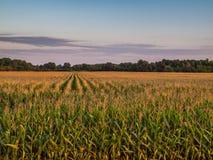 Coucher du soleil nuageux 3 au-dessus de champ rural de ferme de culture de maïs Image stock