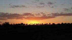 Coucher du soleil orange avec des paumes Image stock