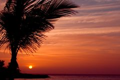 Coucher du soleil orange avec la paume Photographie stock
