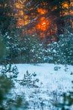 Coucher du soleil orange en hiver photos stock