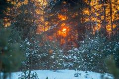 Coucher du soleil orange en hiver image libre de droits