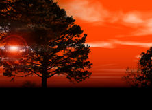Coucher du soleil par des arbres photographie stock