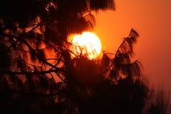Coucher du soleil par des arbres photos stock