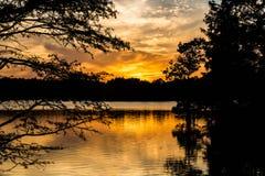 Coucher du soleil par des arbres de Cypress chauve au lac courtaud image stock