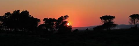 Coucher du soleil par des arbres de pin, Bagnols-en-foret 052 Image libre de droits