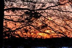 Coucher du soleil par des branches d'arbre Image stock