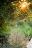Coucher du soleil par des feuilles d'arbre Image stock
