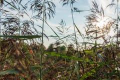Coucher du soleil par l'herbe Images stock