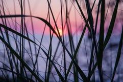 Coucher du soleil par l'herbe photographie stock libre de droits