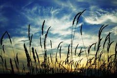 Coucher du soleil par l'herbe Image stock