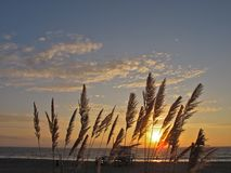 Coucher du soleil par l'herbe des pampas, Torrance Beach, Los Angeles, la Californie Photographie stock libre de droits