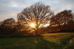 Coucher du soleil par la beauté naturelle d'arbres Photo libre de droits