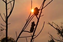 Coucher du soleil par la fumée du feu avec la silhouette de buisson Image stock