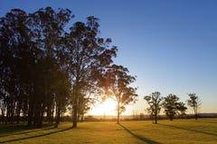 Coucher du soleil par les arbres Image stock