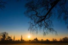 Coucher du soleil par les arbres Photo stock