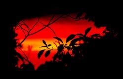 Coucher du soleil par les arbres Photo libre de droits