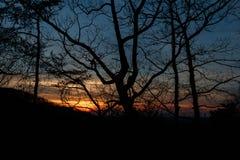 Coucher du soleil par les arbres photos stock
