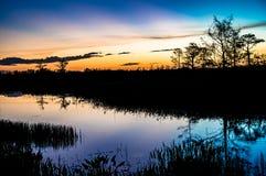 Coucher du soleil par les arbres des marais image libre de droits