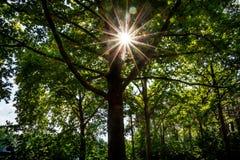 Coucher du soleil par les arbres et les feuilles Images stock