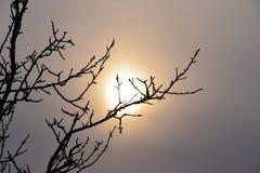 Coucher du soleil par les branches d'un arbre Image libre de droits
