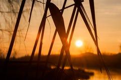 Coucher du soleil par les feuilles Photo stock