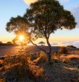 Coucher du soleil par un arbre chez Maido à St Paul, Reunion Island Image stock
