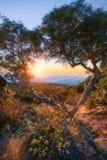 Coucher du soleil par un arbre chez Maido à St Paul, Reunion Island Photo stock