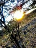 Coucher du soleil par un arbre photos stock
