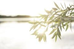 Coucher du soleil par Värnern Images stock