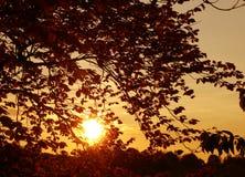 Coucher du soleil parmi le papier peint de fond de nature de feuilles Images stock