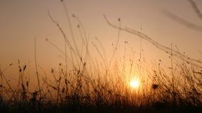Coucher du soleil pastoral image stock