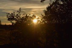 Coucher du soleil pendant l'automne, les couleurs chaudes et les silhouettes d'arbre images libres de droits