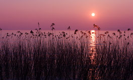 Coucher du soleil pourpré Image libre de droits