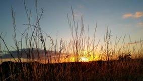 Coucher du soleil pris par l'herbe du Monreberg, Kalkar, Allemagne banque de vidéos