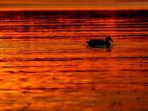 Coucher du soleil romantique au-dessus du lac Image stock