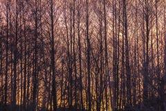Coucher du soleil romantique avec une vue par les arbres Images libres de droits