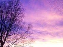 Coucher du soleil rose Photo stock