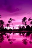 Coucher du soleil rose et rouge au-dessus de plage de mer avec des paumes Images libres de droits