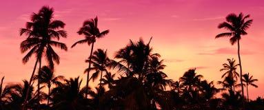 Coucher du soleil rose et rouge au-dessus de plage de mer avec des paumes Images stock
