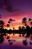 Coucher du soleil rose et rouge bleu au-dessus de plage de mer avec des paumes Image stock