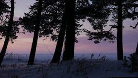 Coucher du soleil rose par les arbres clips vidéos