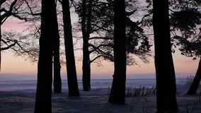 Coucher du soleil rose par les arbres banque de vidéos