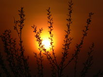 Coucher du soleil rouge Images stock