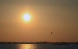 Coucher du soleil rouge de fond abstrait sur le soleil de rivière et l'oiseau de vol lumineux en ciel Photographie stock