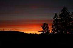 Coucher du soleil rouge foncé avec le silouhette d'arbres de cône de pin Photographie stock