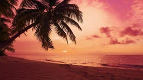 Coucher du soleil rouge naturel ciel pourpre de coucher du soleil palmier au-dessus de stupéfier la Mer Rouge banque de vidéos