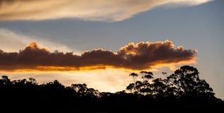 Coucher du soleil rougeoyant au-dessus des arbres de gomme dans l'Australie de NSW photos stock