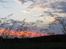 Coucher du soleil rural dans le rose et le bleu photographie stock libre de droits