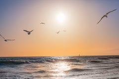 Coucher du soleil sans nuages à l'océan pacifique Images libres de droits